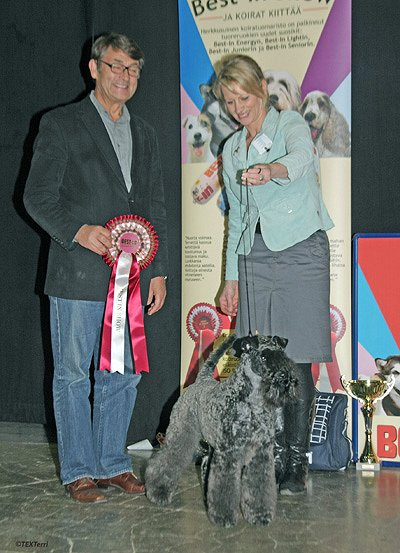 Best In Show Geijes Artful Eye